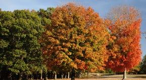 Autumn Trees vändande färger Royaltyfri Foto