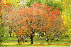 Autumn trees Stock Photography
