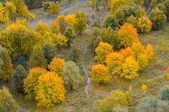 Autumn trees, view from above. Aerial view on a autumn trees, view from above royalty free stock photo