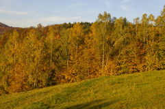 Autumn trees. View on autumn trees in forest stock photo