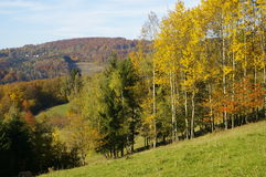 Autumn trees. View on autumn trees in forest stock photos