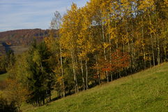 Autumn trees. View on autumn trees in park stock photography