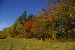 Autumn trees. View on autumn trees in park stock photos