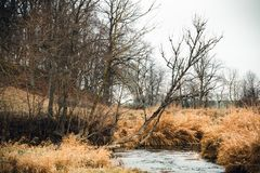 Autumn trees in a view of small wild river.  royalty free stock photos