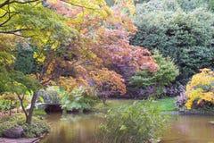 Autumn trees. Stock Image