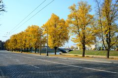 Autumn trees in the Vilnius city centre Royalty Free Stock Photography
