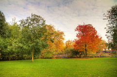 Autumn Vondelpark Royalty Free Stock Photography