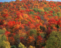 Autumn trees, VT Royalty Free Stock Photo