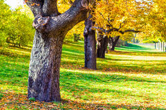 Autumn trees in the Vysehrad Gardens in Prague, Czech Republic Royalty Free Stock Images