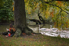 autumn trees walkway 免版税库存照片