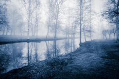 Autumn trees by the water. Autumn trees in the November mist by the water Stock Photo