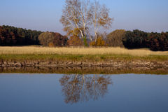 Autumn trees with water reflection. In a lake Royalty Free Stock Image