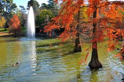 Autumn trees in water Royalty Free Stock Image