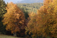 Autumn trees. On White Carpathians Stock Photos