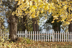 Autumn trees and white fence. Stock Images
