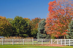 Autumn trees and white fence. A view across a green field to trees with colorful autumn foliage and a white wooden fence on a sunny fall day Royalty Free Stock Image