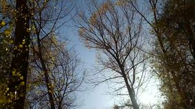 Autumn trees in the wind.  stock video footage