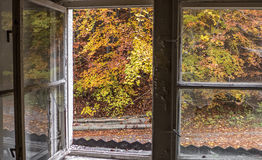 Autumn trees through window Stock Photography