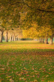 Autumn trees at Windsor. Autumn view of avenue of trees at Windsor UK royalty free stock photo