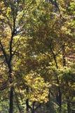 Autumn trees in woods Stock Photos