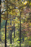 Autumn trees in woods Stock Photo