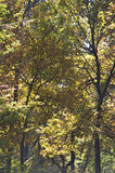 Autumn trees in woods Stock Images