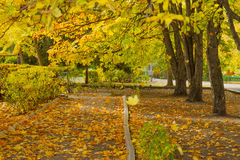 Autumn trees. With yellow leaves Stock Images