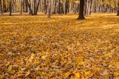 Autumn Trees Yellow Leaves The jord Royaltyfri Bild