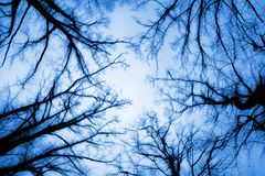 Autumn Treetops Royalty Free Stock Photo