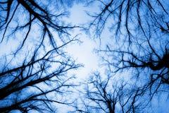 Autumn Treetops Royalty Free Stock Photo