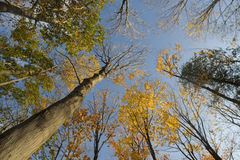 Autumn Treetops Royalty Free Stock Photography