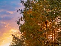 Autumn treetops against a cloudy sky at sunset. Background stock image