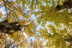 Autumn in the treetops Stock Photo