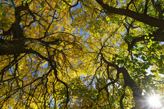 Autumn in the treetops Royalty Free Stock Images