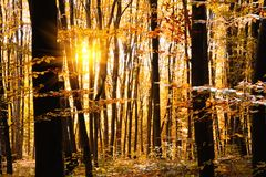 Autumn treetops in fall forest. Sky and sunlight through the autumn tree branches. Copy space royalty free stock image