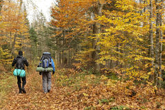 Autumn trekking. Two guys doing trekking in a Quebec forest during the fall season. They cary big backpacks and are going somewhere to camp Royalty Free Stock Photography