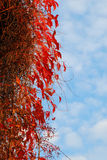 Autumn tress Stock Photography