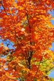 Autumn Tress Imagen de archivo libre de regalías