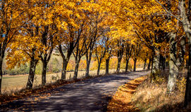 Autumn tress near road Royalty Free Stock Photo
