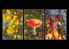 Autumn triptych Stock Photos