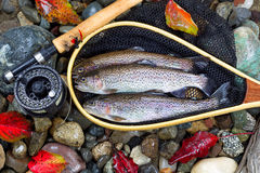 Autumn Trout Fishing Stock Image