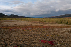 Autumn Tundra in de bergen stock foto's