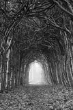 Autumn tunnel Royalty Free Stock Photo