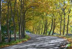 Autumn tunnel of trees - road bend. S down towards opening royalty free stock photos