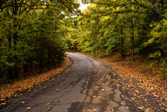 Autumn Turn in the Road. Serene view walking down a paved road in Greenleaf State Park in Northeast Oklahoma Royalty Free Stock Images