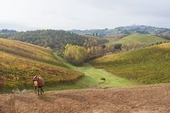 Autumn in Tuscany, Italy. Near San Gimignano Stock Image