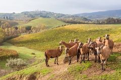 Autumn in Tuscany, Italy. Near San Gimignano stock images