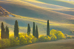 Autumn Tuscany-Landschaft - Hügel, Bäume und Felder Lizenzfreies Stockbild
