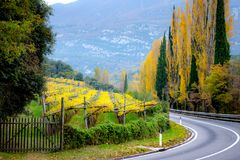 Autumn Tuscany and the rolling road between the vineyards Stock Image