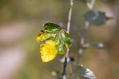 Autumn twig Stock Photos